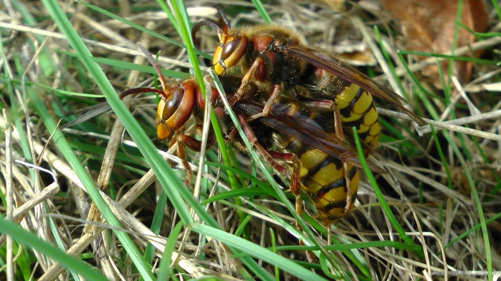 Wespen- und Hornissenschutz